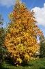 Осенняя рябина (Фото 7)