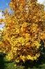 Осенняя рябина (Фото 6)