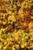 Осенняя рябина (Фото 5)