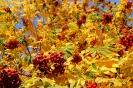 Осенняя рябина (Фото 2)